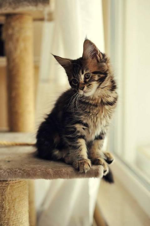 cat.cat.cat.