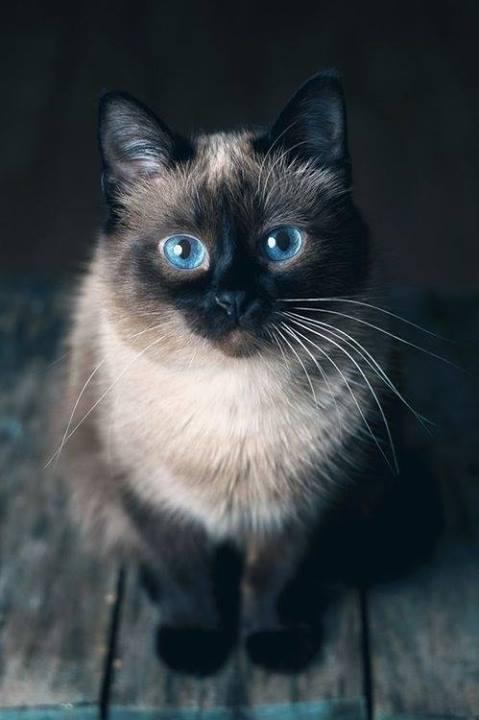 jakie piękne stworzenie *.*