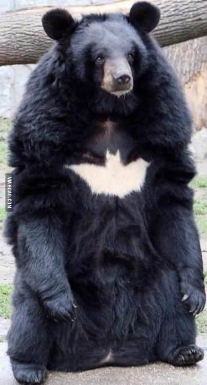Batman istnieje!
