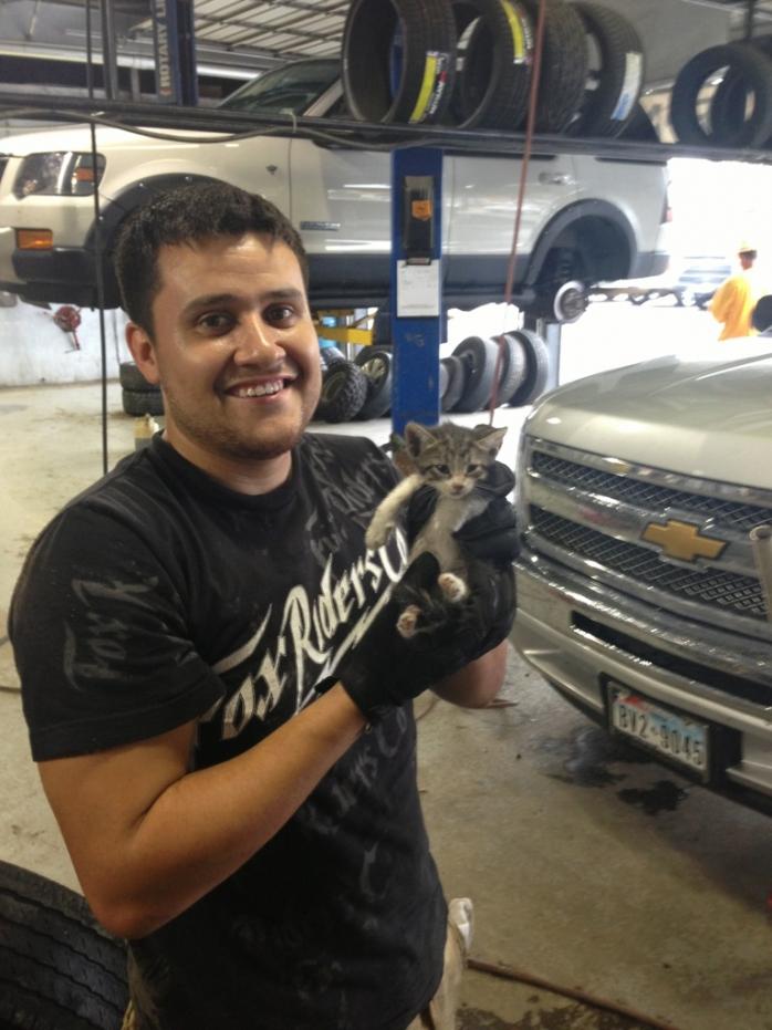 Mechanik znalazł tego małego kocura w aucie pod maską. Nazywa się DODGE :)