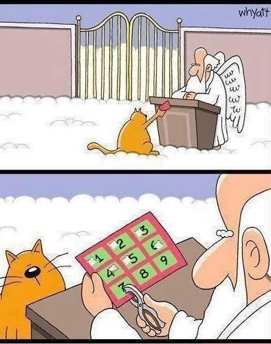 9 żyć kota :)