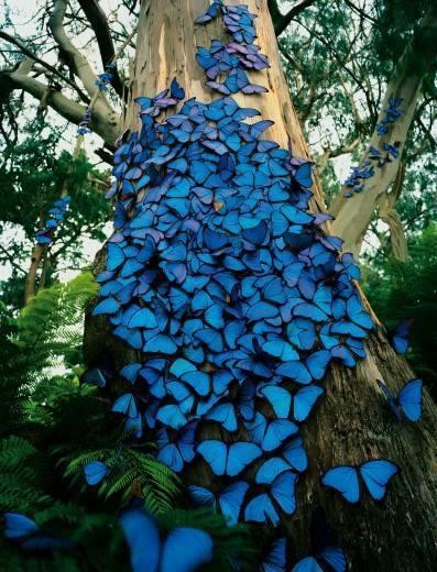 Piękne te motyle <3